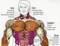 Các bài tập ngực